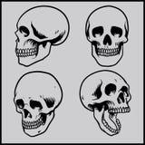 Grupo do crânio Foto de Stock Royalty Free