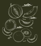 Grupo do desenho da mão de Ector de melões Fotografia de Stock Royalty Free