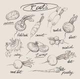 Grupo do desenho da mão do vetor de raizes Fotografia de Stock Royalty Free