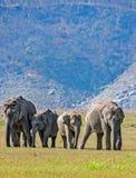 Grupo do elefante imagem de stock