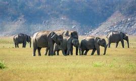 Grupo do elefante fotografia de stock