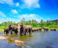 Grupo do elefante no rio imagem de stock
