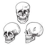 Grupo do esboço do crânio, médico humanos e ciência ilustração do vetor