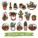 Grupo do esboço da cor das plantas carnudas e dos cactos Fotos de Stock