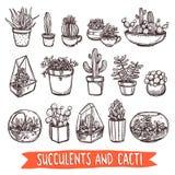 Grupo do esboço das plantas carnudas e dos cactos Imagem de Stock