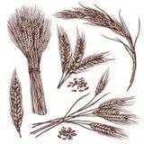Grupo do esboço do trigo ilustração royalty free