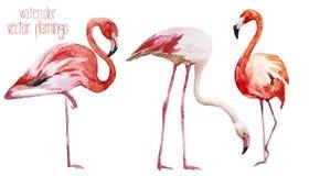Grupo do flamingo ilustração stock