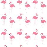 Grupo do flamingo Pássaro tropical exótico do teste padrão sem emenda Coleção do animal do jardim zoológico Personagem de banda d Imagem de Stock