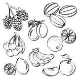 Grupo do fruto Imagem de Stock Royalty Free
