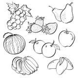 Grupo do fruto ilustração stock
