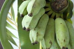 Grupo do fruto tropical da banana Imagens de Stock Royalty Free