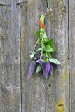 Grupo do fundo de madeira de florescência do hyssop de anis fotografia de stock royalty free