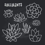 Grupo do gráfico de plantas carnudas na placa de giz para o projeto dos cartões, convites Imagens de Stock Royalty Free