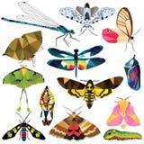Grupo do inseto ilustração stock