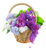 Grupo do lilás fresco foto de stock royalty free