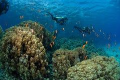 Grupo do mergulhador com peixes Fotografia de Stock Royalty Free