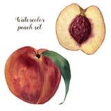 Grupo do pêssego da aquarela Ilustração pintado à mão do alimento com o fruto doce isolado no fundo branco botanical ilustração do vetor