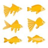 Grupo do peixe dourado isolado no fundo branco O ouro amarelo pesca a ilustração do vetor dos ícones Imagens de Stock Royalty Free