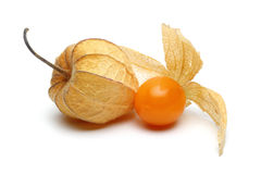 Grupo do Physalis Imagem de Stock Royalty Free