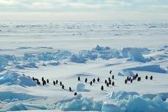 Grupo do pinguim no icescape imagens de stock royalty free