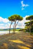 Grupo do pinheiro no fundo da baía da praia e do mar Punta Alá, Toscânia, Itália foto de stock