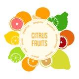 Grupo do plano das citrinas Bergamota, limão, toranja, cal, o mandarino, pomelo, laranja, laranja pigmentada com fatias Fotografia de Stock