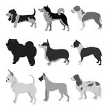 Grupo do plano dos cães Foto de Stock Royalty Free