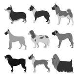 Grupo do plano dos cães Imagens de Stock Royalty Free