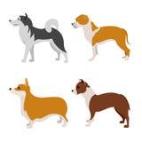 Grupo do plano dos cães Fotos de Stock Royalty Free