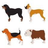 Grupo do plano dos cães Fotografia de Stock Royalty Free