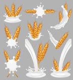 Grupo do respingo do leite do arroz, ilustração realística do vetor ilustração royalty free