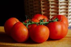 Grupo do tomate imagem de stock royalty free