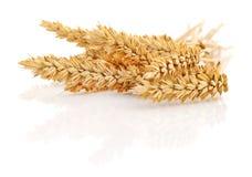 Grupo do trigo no branco Imagem de Stock