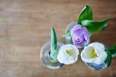 Grupo do uso criativo das tulipas do foco Fotos de Stock Royalty Free