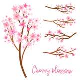 Grupo do vetor da flor de cerejeira da mola Sakura isolou-se ilustração royalty free