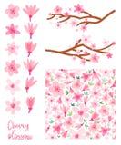Grupo do vetor da flor de cerejeira da mola Sakura isolou-se ilustração stock
