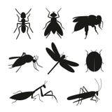 Grupo do vetor da silhueta dos insetos Imagens de Stock