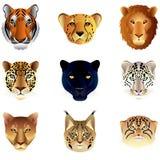 Grupo do vetor das cabeças dos gatos grandes Fotos de Stock Royalty Free