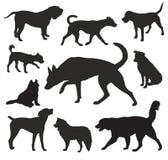 Grupo do vetor das silhuetas do cão Imagem de Stock Royalty Free