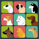 Grupo do vetor de ícones diferentes dos cães no estilo liso na moda Foto de Stock Royalty Free