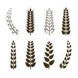 Grupo do vetor de ícones do trigo, símbolos da grão, coleção diferente das formas, elementos pretos do projeto isolados ilustração royalty free