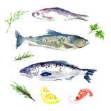 Grupo do vetor de alimento de mar da aquarela ilustração royalty free