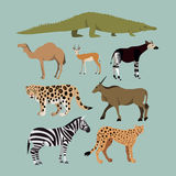 Grupo do vetor de animais africanos diferentes Animais do camelo africano do dromedário do savana, crocodilo, leopardo, ocapi Fotos de Stock