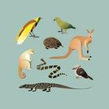 Grupo do vetor de animais australianos diferentes Animais do Echidna australiano do canguru, cuscuz, lagarto gigante australiano Imagens de Stock Royalty Free