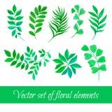 Grupo do vetor de coleção floral com as folhas que tiram a aquarela Imagem de Stock