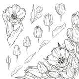 Grupo do vetor de elementos da tulipa do esboço Elemento de canto para floral ilustração stock