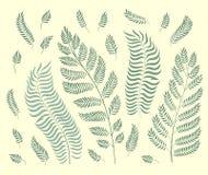 Grupo do vetor de ervas do jardim isoladas no fundo verde retro ilustração do vetor