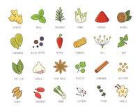 Grupo do vetor de especiarias e de erva culinárias para seu menu ou projeto da cozinha Condimentos coleção, gengibre, manjericão, ilustração royalty free