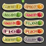 Grupo do vetor de etiquetas coloridas dos frutos e das bagas ilustração stock