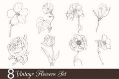Grupo do vetor de 8 flores do desenho do vintage com tulipa, papoila, íris, Rosa, magnólia, no estilo retro clássico ilustração royalty free